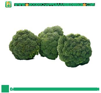 Broccoli aanbieding