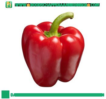 Rode paprika aanbieding